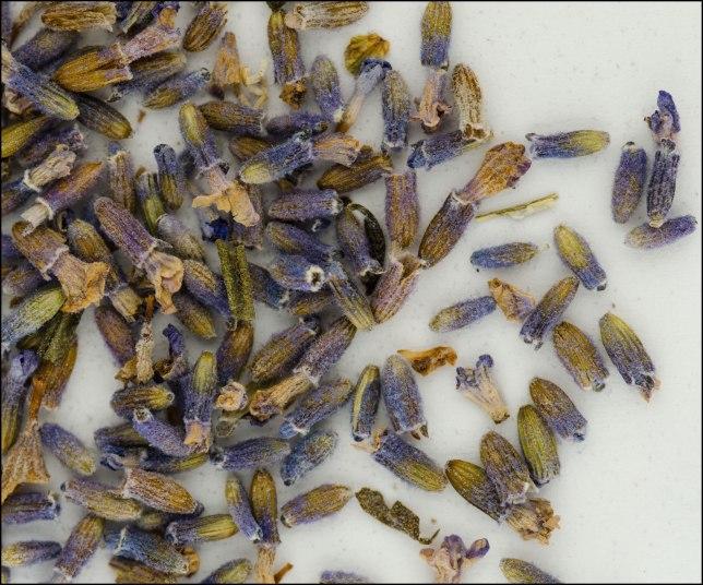 Lavender-dry-flowers-web-2