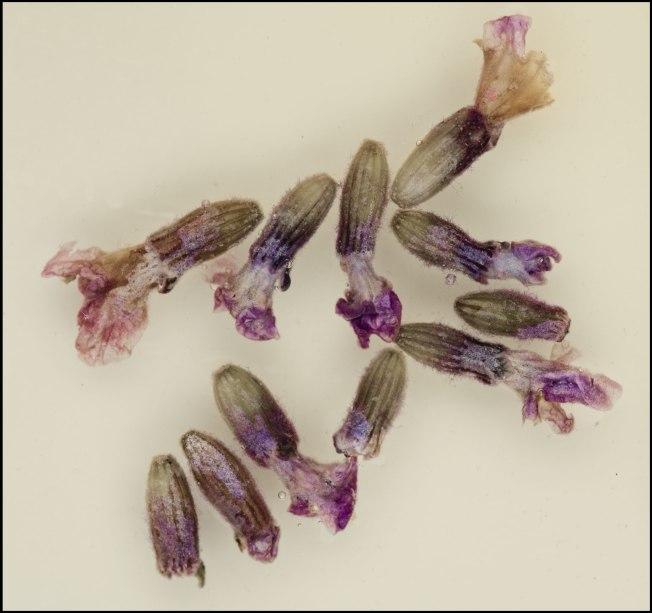 Lavender-soak-web-2